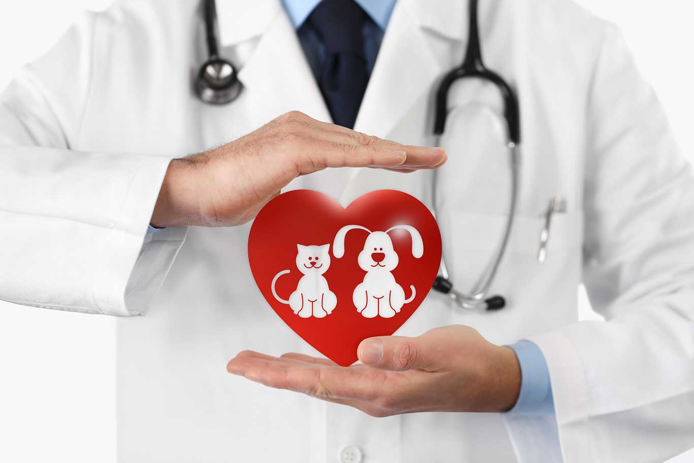 Doctor holding toy in shape of heart