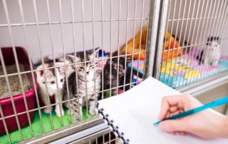 Nurse checking is everything ok with kittens