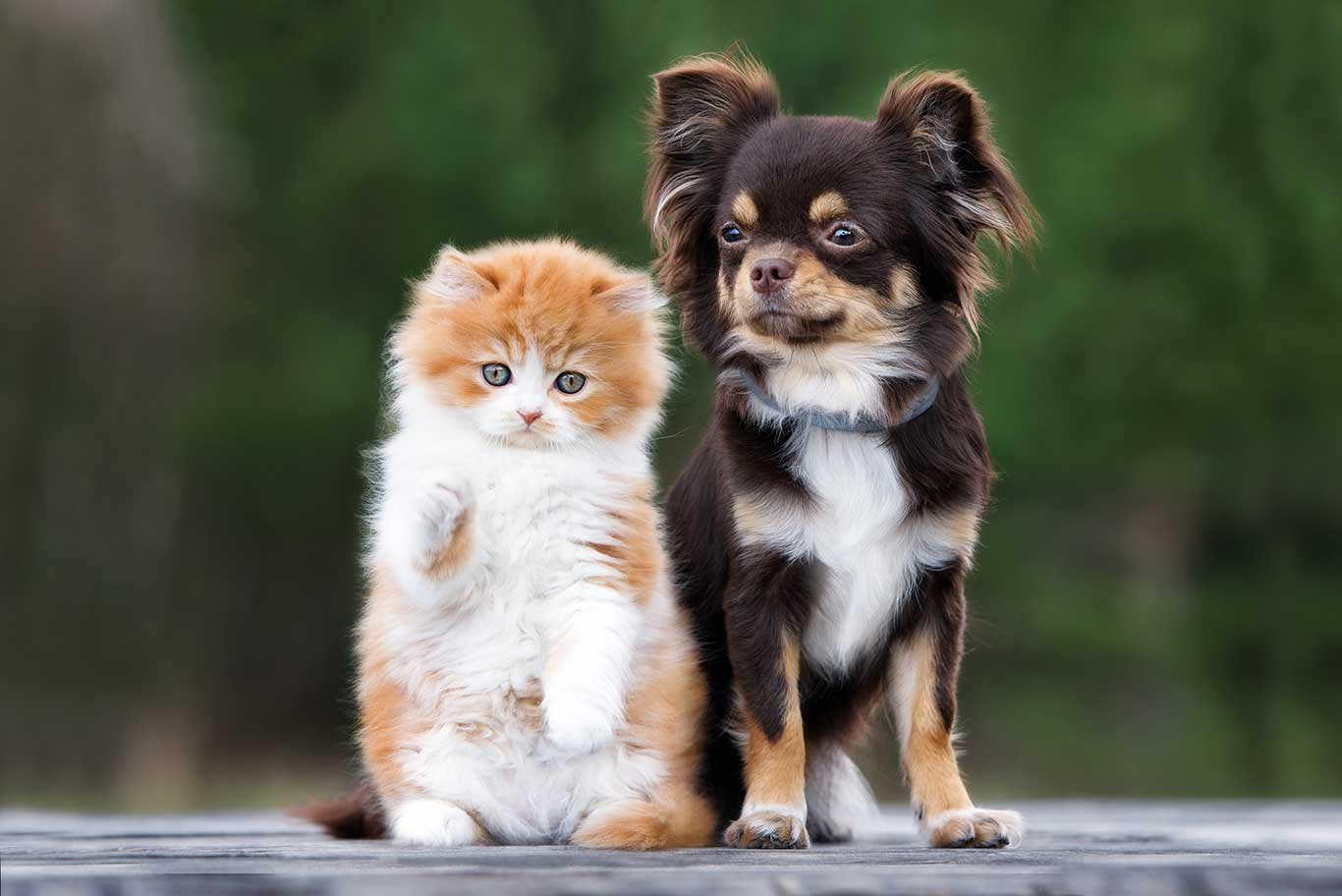 Cute puppy and kitten standing next to each others
