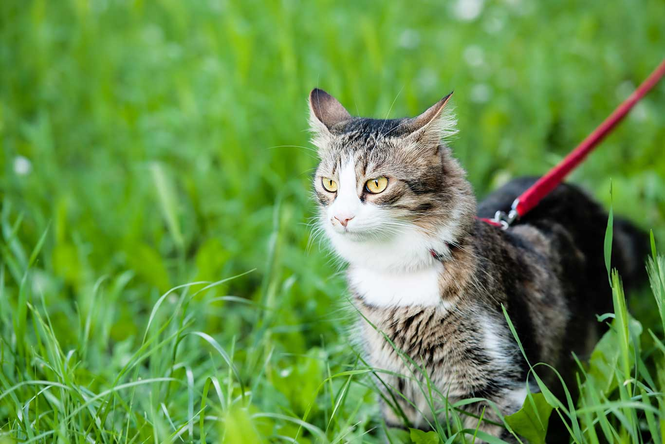 Cat in grass field