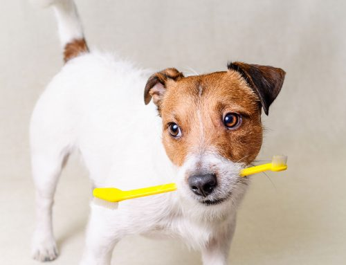 Dental Care for Cats and Dogs