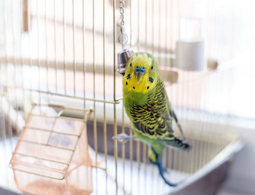 Caring for Pet Birds